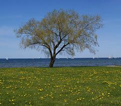 hashphoto-drzewo_gabinet1_fbjwbegaywtmcxif.jpg